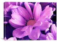 Purple Painted Flower                         , Canvas Print