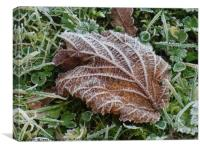 Frost on a Brown Leaf                        , Canvas Print