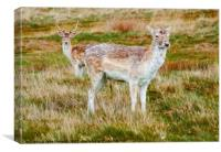 Deer in the Grass, Canvas Print