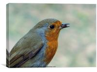 Robin in the Garden, Canvas Print