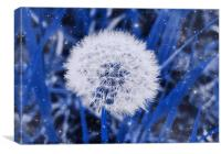 Dandylion Seeds                         , Canvas Print