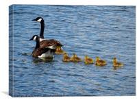 Canada Goose Family                     , Canvas Print
