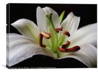 The Center of a Lilly, Canvas Print