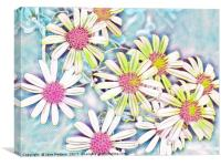 Daisies in Pastel Shades, Canvas Print