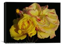 Roses in Bloom, Canvas Print