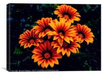 Orange Petals, Canvas Print
