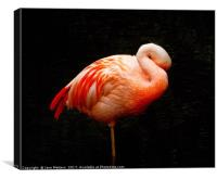 Flamingo Asleep, Canvas Print