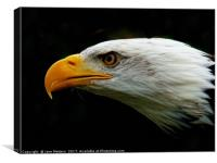 Eagles Head, Canvas Print