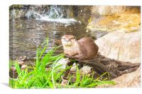 Asian Small Clawed Otter                    , Canvas Print