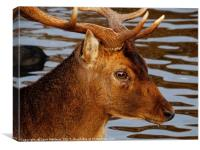 The Head Of A Deer            , Canvas Print