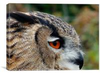 The Eye of an Owl                            , Canvas Print