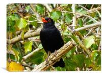 A Singing Blackbird                          , Canvas Print