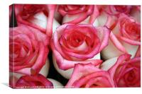Pink-Tipped Roses, Canvas Print