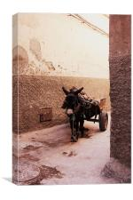 A Donkey in the Shade in Morocco, Canvas Print