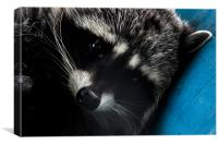 Close Up Of Raccoon on Blue I, Canvas Print