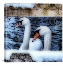 Two swans in the snow, Canvas Print