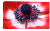 Anemone centre, Canvas Print