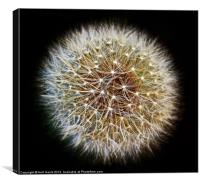 Dandelion Seed Head (2), Canvas Print