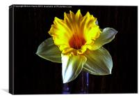 Daffodil in the dark, Canvas Print