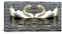 Mute Swan Heart, Canvas Print