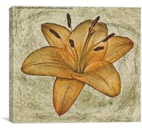 Textured lily, Canvas Print