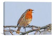 Little Songbird, Canvas Print