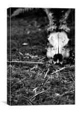 forest creatures, Canvas Print