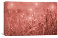 fairy dust, Canvas Print