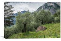 Olives, Canvas Print