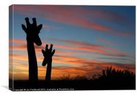 Giraffes and sunset, Canvas Print