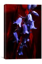 Bluebells on Red, Canvas Print