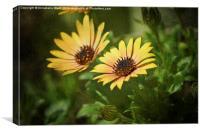 Spring Flower Smile., Canvas Print