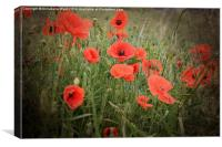 Poppy Love., Canvas Print