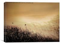 Fly By Dawn, Canvas Print