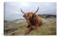 Highland Cow Chilling Out, Canvas Print