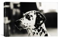 Special Glance for You             , Canvas Print