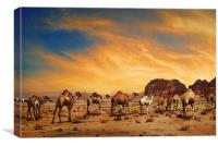 Camels in Wadi Rum, Canvas Print