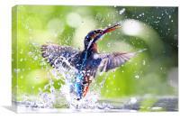 Into the Sun Kingfisher, Canvas Print