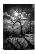 Shadows of Nature, Canvas Print
