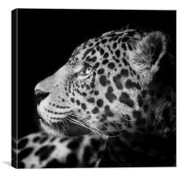 Eyes of the Jaguar, Canvas Print