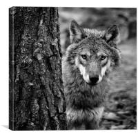 The Eyes of the Wolf, Canvas Print