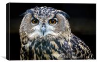 European Eagle Owl Portrait, Canvas Print