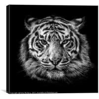 Tiger Portrait, Canvas Print