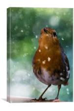 Winter Robin, Canvas Print