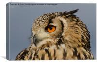 Eagle owl looking left, Canvas Print