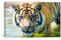 Tiger in the water, Canvas Print