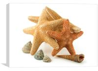 Starfish, Canvas Print