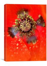 Poppy Head macro, Canvas Print