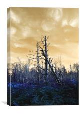 Death of The trees, Canvas Print