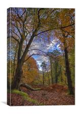 Autumn In The Woods, Canvas Print